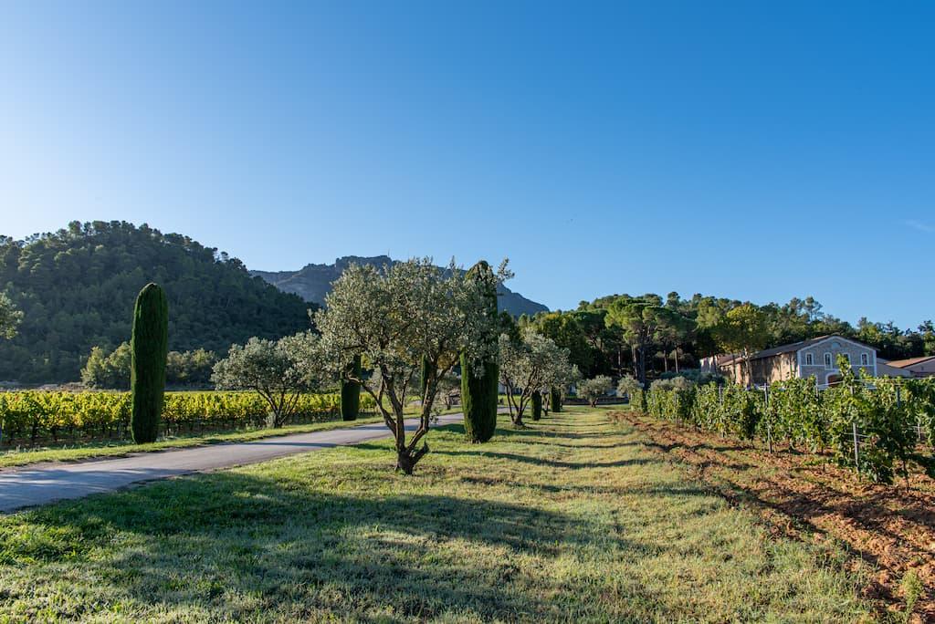 Entre oliviers et vignoble, château de l'escarelle